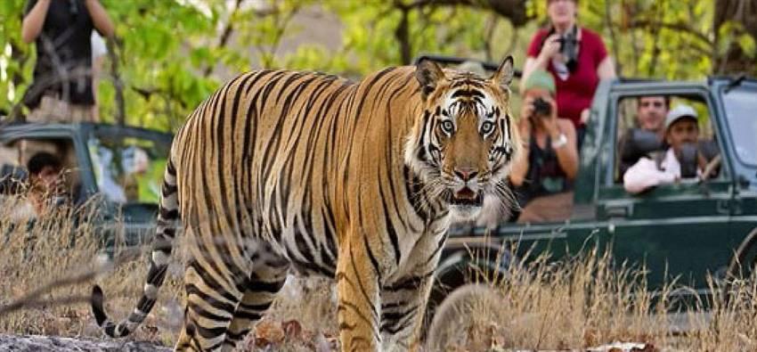 Safari in Rajasthan