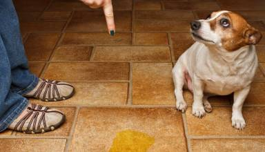 Solutions to most Common Dog behavior Problems