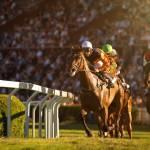 Horse Racing Rail