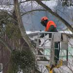 tree arborists in Sydney