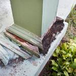 How do you Know if Termite Damage is Bad