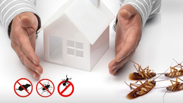 Control pest in your home