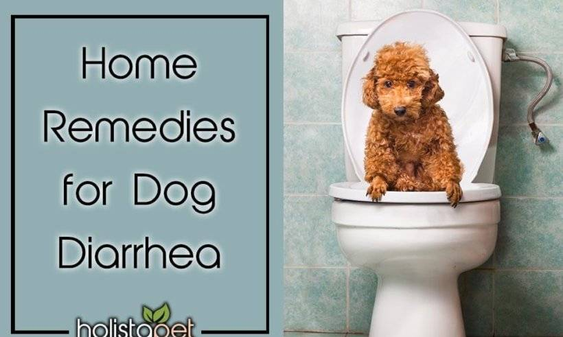 Treating Dog Diarrhea