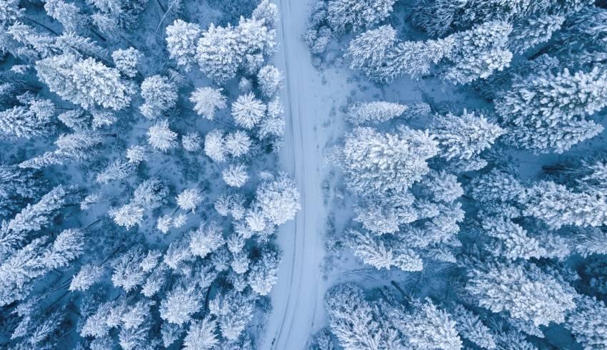 upcoming winter season