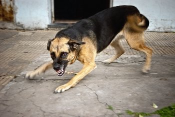 4 Things to Do after Being Attacked by a Neighbor's Dog