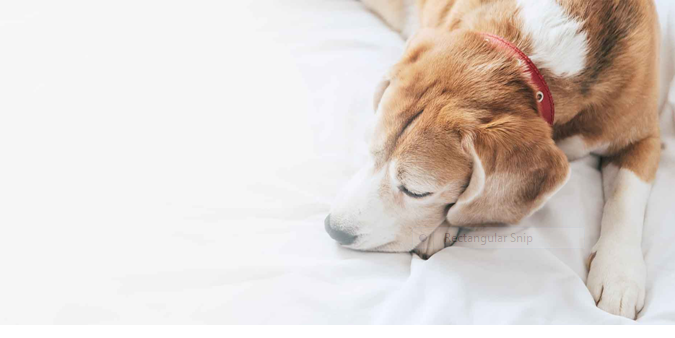 Basic Signs Your Pet Need To See A Vet | Health Guide