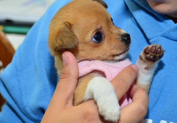 Ways of Donating a Pet