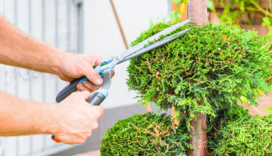 Things To Consider When Looking For Tree Trimming Services in Sacramento