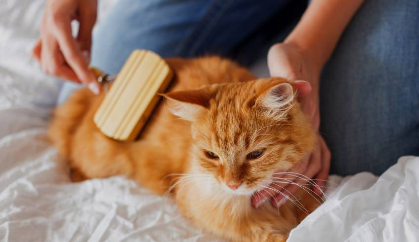 Tips to Keep Your Cat Happy in a Small House
