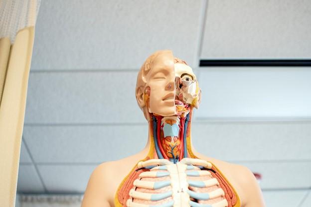 5 Things You'll Learn In Pharmacy Tech School