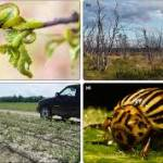 9 Environmental Conditions That Encourage Pests