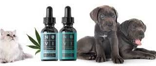 Elaborating on the Significance of CBD Oil for Pets
