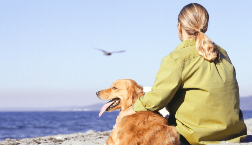 Health Risks Commonly Associated with Golden Retrievers