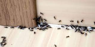Control Pests in Boise Valley