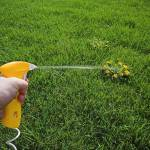 Weed Control in Your Lawn