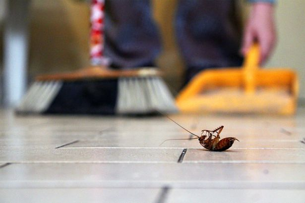 Effective Ways to Keep Your Home Free of Pests