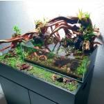 aquarium plants live