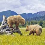 Top Things To Do In Alaska