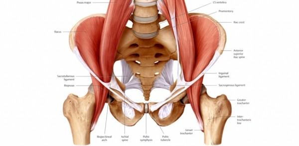 Hip Flexure Muscle's Maintenance