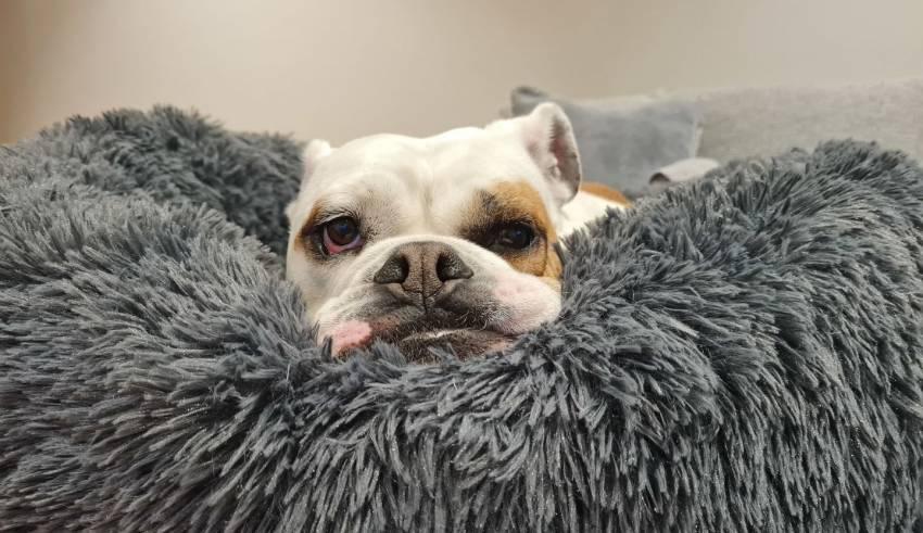 dog behaves